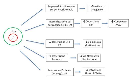 Figura 3: Meccanismi di escape dell'HCV dalla risposta immunitaria innata