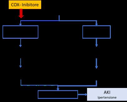 Inibizione di COX da FANS e meccanismo di AKI