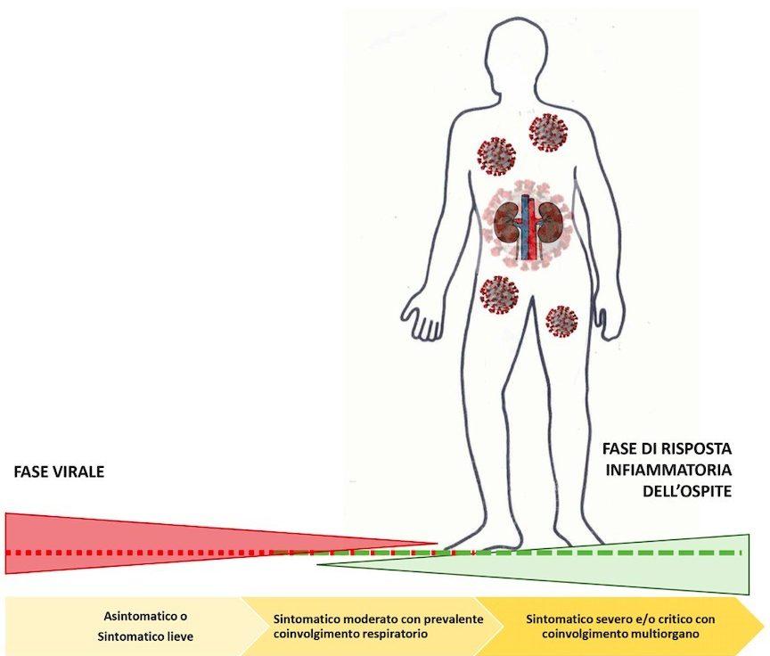 Schematizzazione delle fasi della COVID-19
